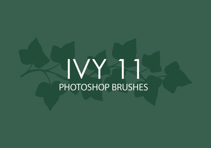 Ivy Photoshop Brushes 11