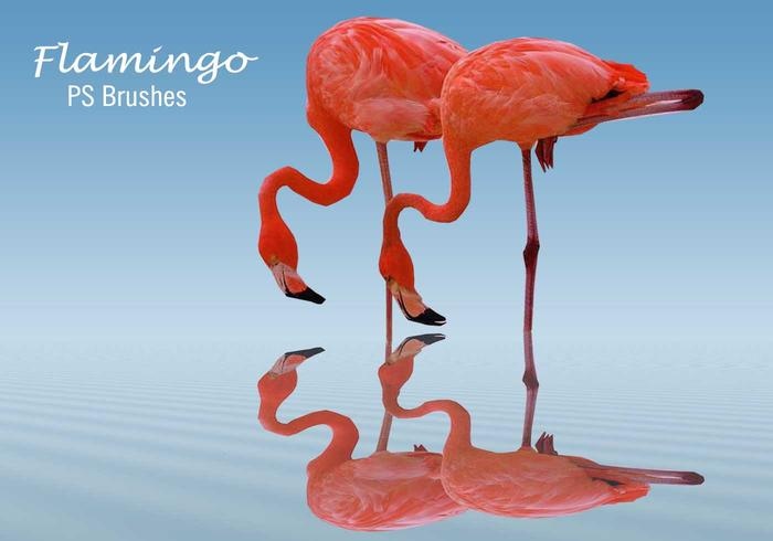 20 Flamingo PS Brushes.abr vol.5