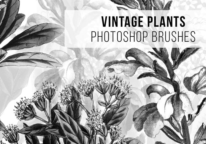 Hi Resolution Vintage Plants Photoshop Brushes