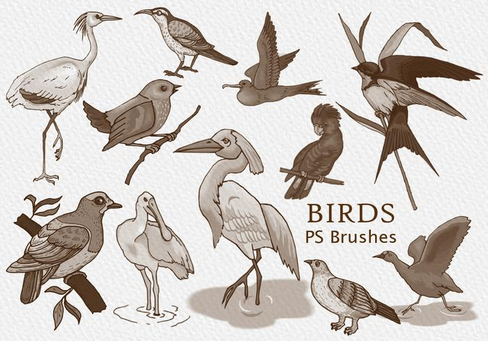 20 pájaros PS Brushes.abr vol.1