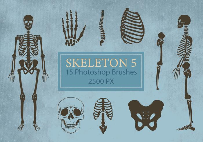 Skeleton Photoshop Brushes 5