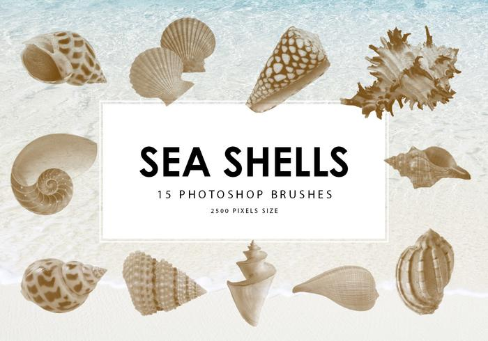 Sea Shells Photoshop Borstar