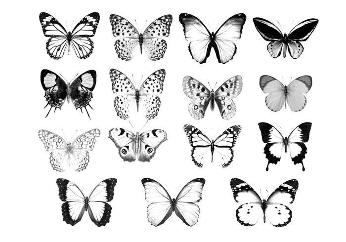 vlinder borstel collectie