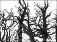 Tote Bäume