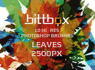 Bittbox-brushes