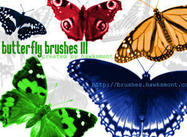 Butterfly3-brushes-by-hawksmont300
