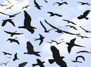 Pinceles de Photoshop para pájaros