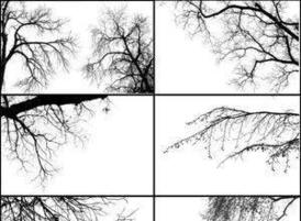 Tree_borders_iii_by_midnightstouch