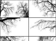 Trädgränser