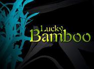 Glücklicher Bambus
