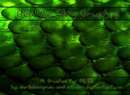 Reptile Skin Brushes