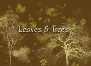 Blätter & Bäume