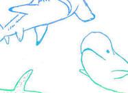 Meer Vissen
