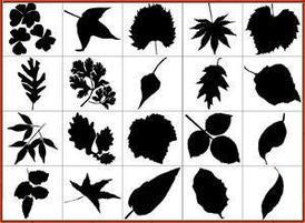 Free_leaf_silhouettes300-220