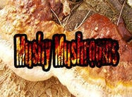 Textures de champignons