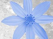 Pétalos de flor