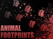 Individual Animal Footprint Brushes