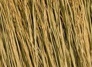 Straw, Magasinet