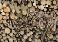 Trunk, wood