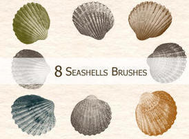 8seashells_thumb