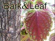 Casca e folha