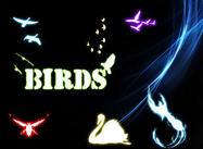 Formas de los pájaros