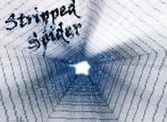 Stripped_spider