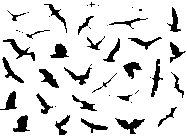30 Flying Birds