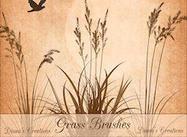 Grasbürsten