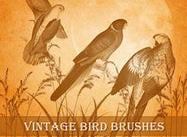 Vintage Bird Brushes