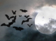 10 Simple Vampire Bats Pinceles (Halloween)