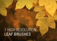 7 High Resolution Leaf Brushes