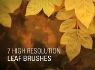 7 High Resolution Leaf Brushes