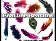 Feather-brushes