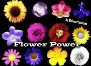 Flower-brushes1