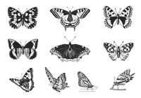 Butterfly Brush Pack