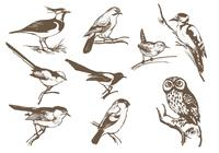 Etched-bird-brush-pack-photoshop-brushes