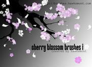 Fleur de cerisier 1