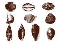 Etched-shell-brushes-pack