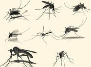 Pinceaux à moustique