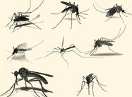 Mosquito Brushes