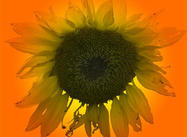 Large SunFlower Brush