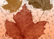 Fall-leaves-brush-pack
