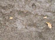 Texture boueuse