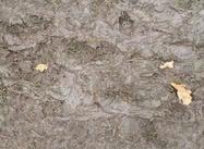 Textura Muddy