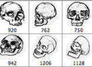 Pinceaux au crâne