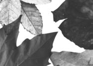 Leaf-brushes