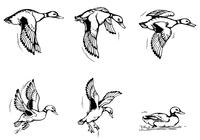 Flying-duck-brushes-pack