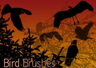 18 Bird Brushes