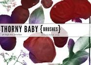 Thorny-baby-rose-brushes